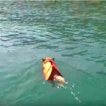 Mitzie love to swim